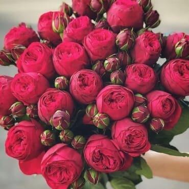 Розы Пионовидные