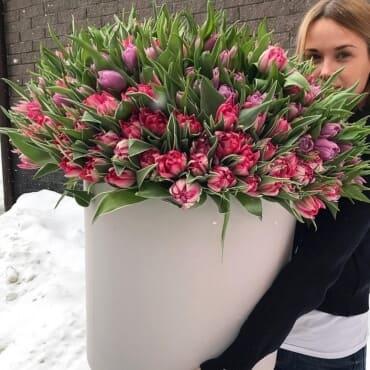 Букет из 301 малинового тюльпана